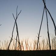 Szőlőkarók - Somoska (Moldva)